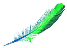 Bird feather Stock Photos