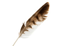 Bird Feather Royalty Free Stock Images