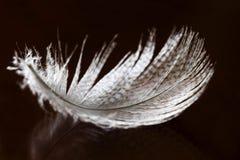 Bird Feather Royalty Free Stock Photos