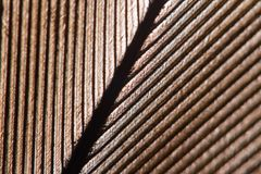 Bird feather background. Macro studio shot. Bright light through bird feather. Super macro studio shot. You can see structure Royalty Free Stock Photo