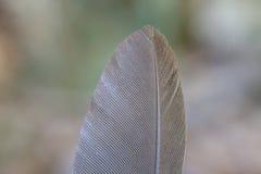 Bird feather Royalty Free Stock Photo