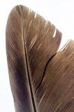 Bird feather closeup Stock Images