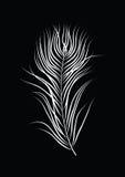 Bird feather illustration on black background Royalty Free Stock Photography