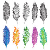 Bird feather illustration set vector Royalty Free Stock Photos