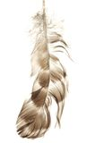 Bird feather isolated on white background Stock Photography
