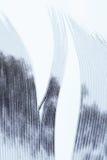 Bird feather  over white Stock Photo