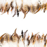 Bird feather Stock Photography