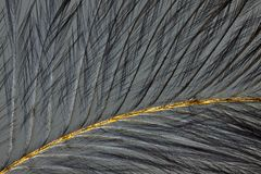 Bird feather in polarized light Royalty Free Stock Photo