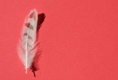 Bird feather Royalty Free Stock Photo