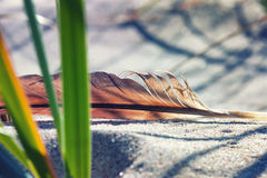 Bird feather on the sand in green grass Royalty Free Stock Photo