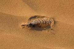 Bird feather in the sand royalty free stock photo