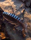 Bird feather Stock Photography