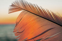Bird feather on sunset background Stock Image