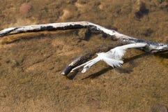 Bird feather. Bird feather on the tree Royalty Free Stock Photos