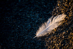 Bird feather on the water. Sandy beach at sunset with shadow Royalty Free Stock Images