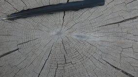 Bird feather wooden stub background