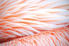Bird feathers Stock Image