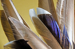 Bird feathers Royalty Free Stock Photo
