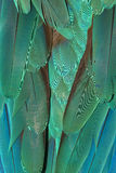 Bird Feathers Background. Teal green macaw feathers background Royalty Free Stock Photography