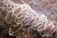 Bird feathers Royalty Free Stock Photography