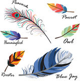 Bird feathers Stock Images