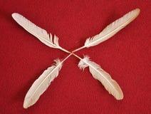BIRD FEATHERS Royalty Free Stock Image