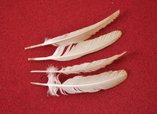 BIRD FEATHERS Royalty Free Stock Images