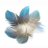 Bird feathers isolated Royalty Free Stock Photography