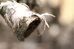 Free Bird Feathers On A Charred Log Stock Image - 179866931