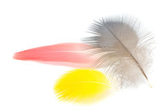 Bird feathers Stock Photography