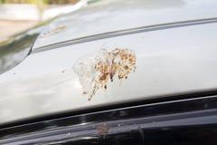 Bird feces on car. Bird droppings feces on car Royalty Free Stock Photography