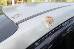 Bird feces on car. Bird droppings feces on car Stock Image