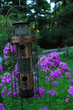 Bird Feeder. A copper bird feeder in front of a group of delicate, purple flowers royalty free stock photography