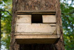 Bird-feeder. Close-up of simple wooden bird-feeder on a tree Stock Photo