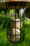 Bird feeder. Royalty Free Stock Image