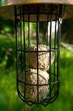 Bird feeder. Royalty Free Stock Image