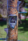 Bird Feeder. Full of bird seed hanging in backyard for birdwatching Royalty Free Stock Photography