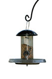 Bird feeder. A garden bird feeder hanging on a wrought iron hoot, set against an isolated white background. Feeder filled with seeds and mealworms Stock Images