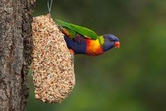 Bird at Feeder Stock Photos