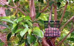 Bird Feeder Awaiting the Bird Royalty Free Stock Images