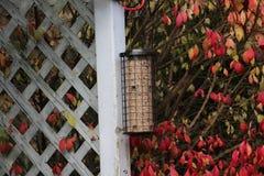 Bird feeder. In the backyard Royalty Free Stock Photo
