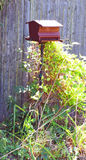 Bird feeder in backyard Royalty Free Stock Photo