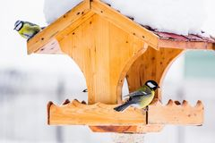 Bird feeder with tits in winter. Bird feeder with blue and great tits in winter Stock Images