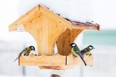 Bird feeder with blue tits in winter. Bird feeder with blue tits Parus Caerulius in winter Royalty Free Stock Photos