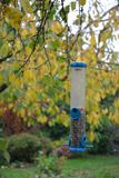 Bird Feeder, Branch, Tree, Leaf Stock Images
