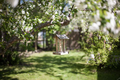 Bird feeder on a cherry blossom tree. In early spring Royalty Free Stock Photos