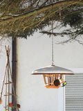 Bird feeder with eating blue tit Royalty Free Stock Photography