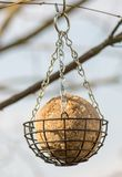 Bird feeder with a fat ball Stock Images