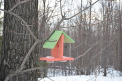 Bird feeder in the forest stock photo