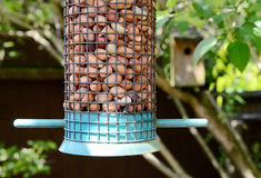 Bird Feeder Royalty Free Stock Image